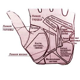 Диагностика по руке